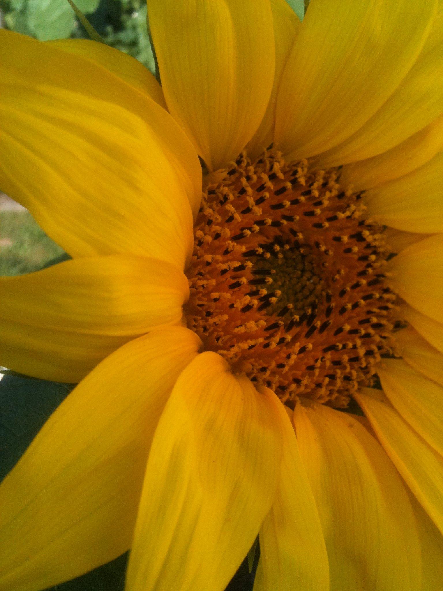 summer-office-photo-flower